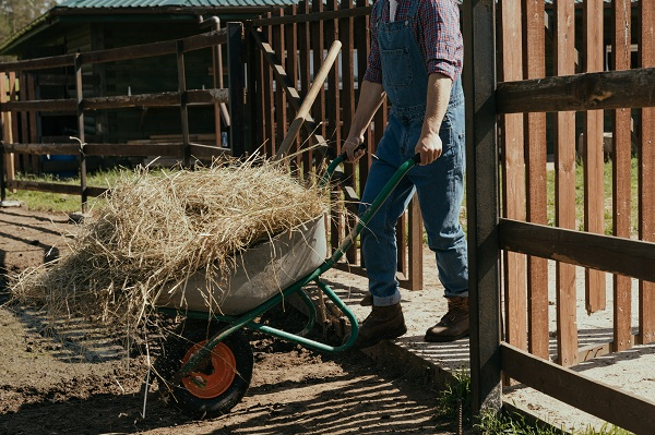 farmer pushing hay in wheelbarrow